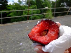 FOLの丘で食べたプルーン