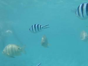 ピッシンヌナチュレル 魚④