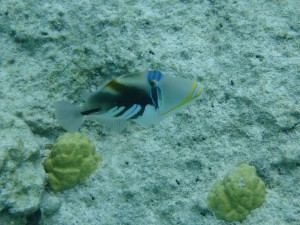 ピッシンヌナチュレル 魚⑥