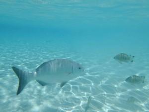 ピッシンヌナチュレル 魚①