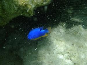 ピッシンヌナチュレル 魚⑦