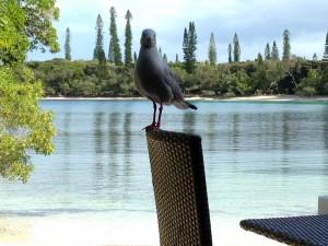 イルデパン島にいたお茶目なヤツら。